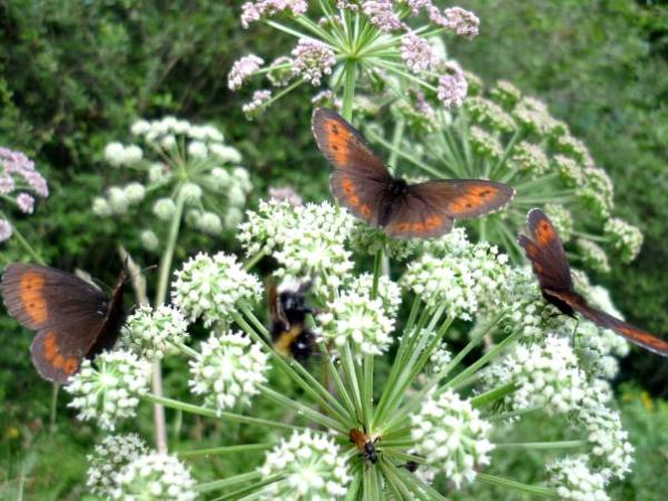 Пеперудки